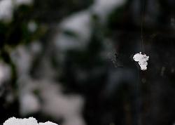 Snowflake in a cobweb