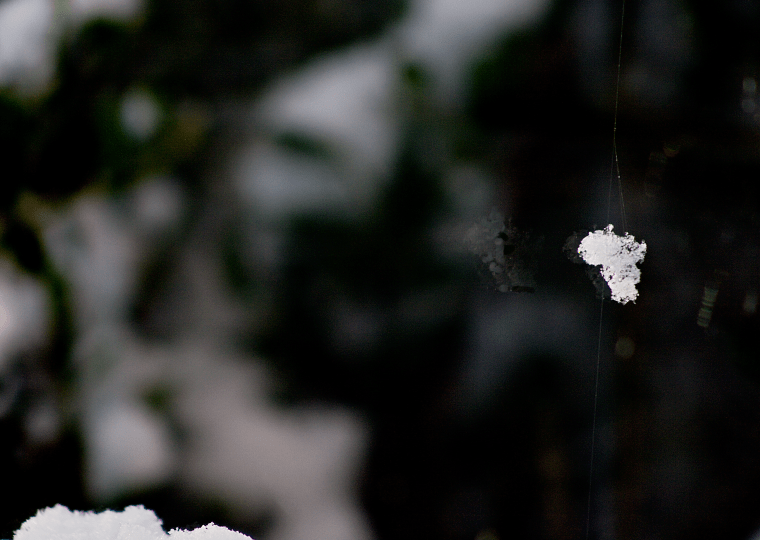 Marvel at snow flakes caught on a web's thread.