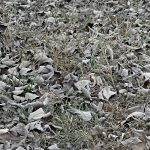 Dead leaves and dried-up grass